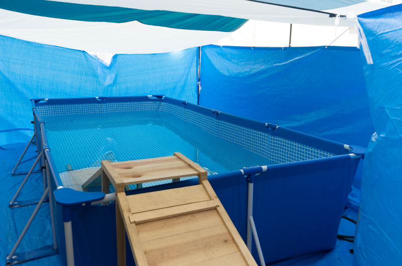SOUTHFIELD rectangular camp tarp tent and Indoor pool surrounded by blue sheets.